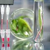 جهت استفاده  خدمات استخراج RNA از گیاه با شرکت تماس حاصل نمایید